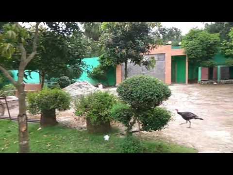 Turkey Farm In Dhaka Bangladesh.(একটি বাড়ি একটি খামার) টার্কি ইন্ডাস্ট্রি বাংলাদেশ -01679318593/4