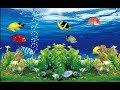 Balık Burcu Özellikleri  Kadını Erkeği Nasıldır? - YouTube