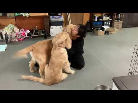 超大型子犬を抱っこする動画、のはずが三段腰フリフリ