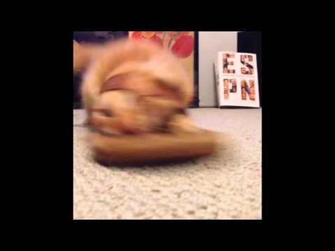 Kitten + Slipper Vine