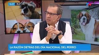 ¿por Qué Se Celebra El Día Internacional Del Perro?