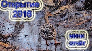 открытие охоты на утку 2016.логово бобра.