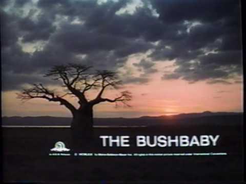 "The Bushbaby - Opening credits / ""Kwaheri"" (MGM, 1969)"