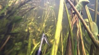 Подводная охота. Один на реке.(Был один на речке, красота подводного мира и много рыбы! Моя группа в вк https://vk.com/club95776223 Моя страница в вк..., 2015-07-26T16:24:05.000Z)