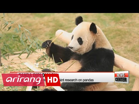 Everland Panda World grand opening, pandas from China unveiled to public