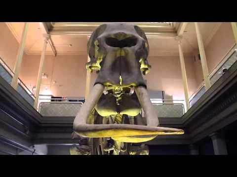 AUSTRALIA - SYDNEY - AUSTRALIAN MUSEUM