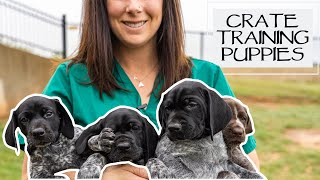 Crate Training A New Litter Of Puppies At 5.5 Weeks Old
