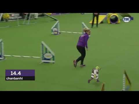 Shrek Wins Dog Race Meme Youtube