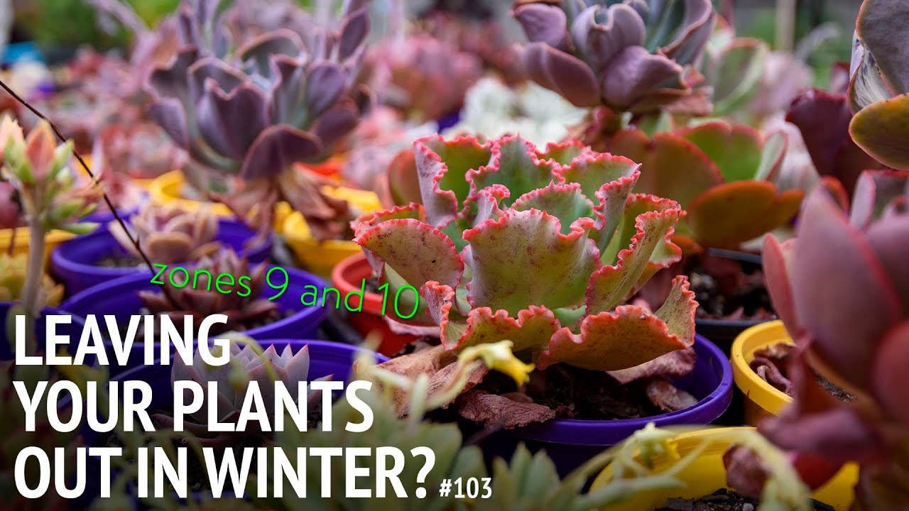 103 Growing Succulents In The Ground During Winter Tips For Zones 9 And 10