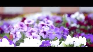 Кокшетауская молодежь сняла видеоролик о цветниках города