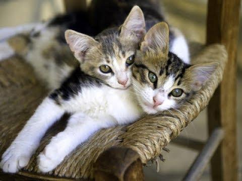 Adopting A Kitten? Make It A Double!