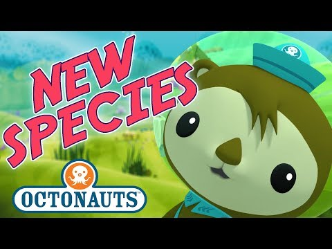 Octonauts - Discovering Species | Cartoons for Kids | Underwater Sea Education