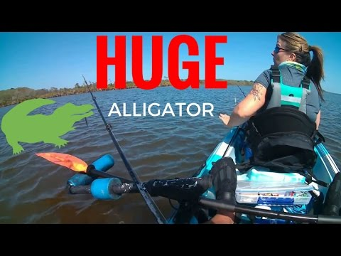 First Time To Guana River And Lake In The Vibe Kayak, Huge Alligator Seen