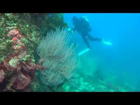 diving-on-santa-cruz-island,-ca-19oct14
