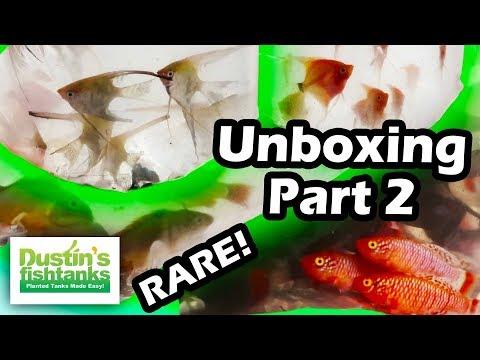 SEGREST RARE AQUARIUM FISH UNBOXING PART 2