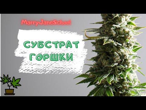 Субстрат для марихуаны.Как посадить куст марихуаны. Каннабис в домашних условиях.