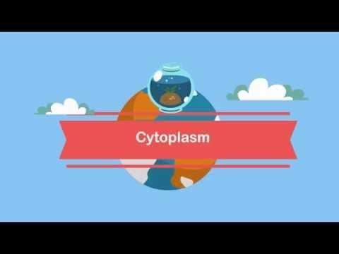 Function Cytoplasm