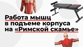 "Работа мышц в подъеме корпуса на ""Римской скамье"""