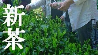 宇治田原・永谷宗円生家で製茶体験 / making of Japanese  tea leaf at Ujitawara Japan 13.05.12