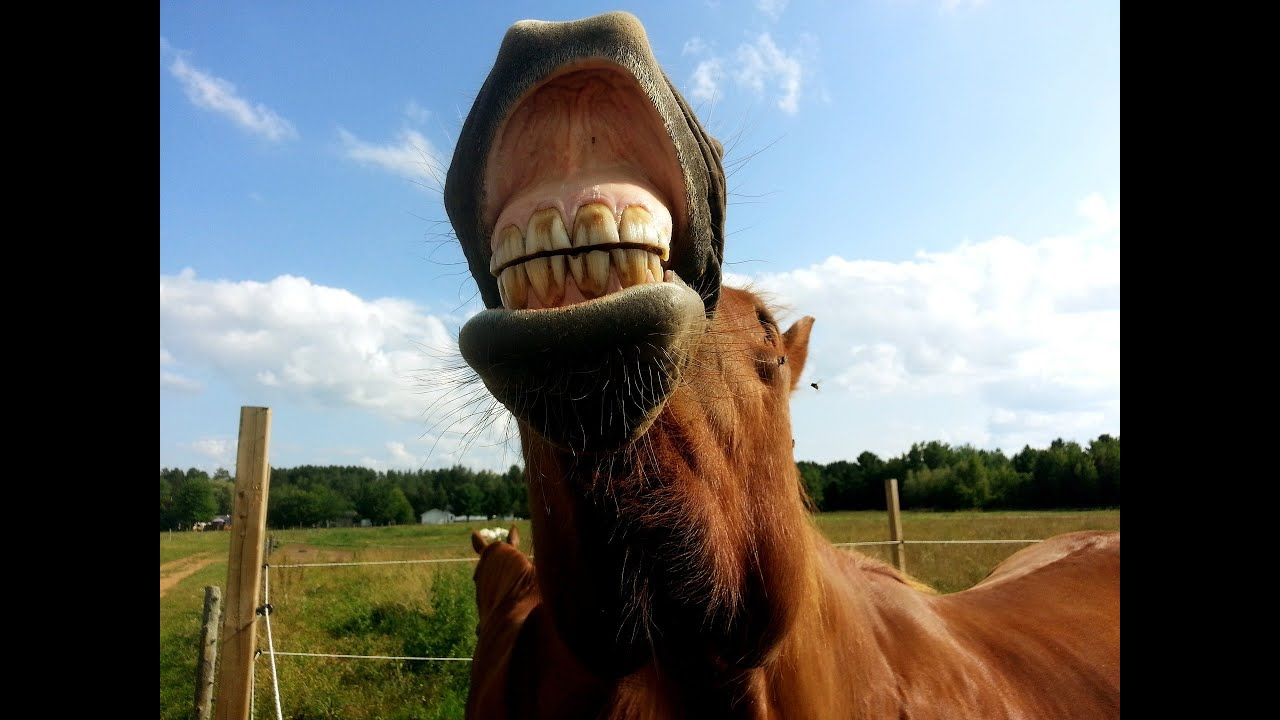 Funny Smiling Horse Pictures