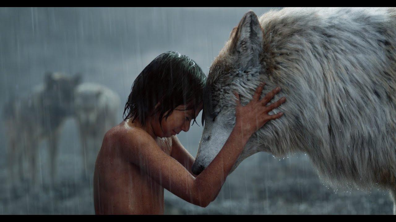 人类小孩被狼王养大,得知狼王被老虎杀死之后,一人替狼王报仇