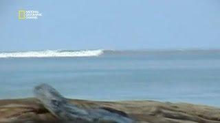 Le tsunami du 26 décembre 2004 - Top 100 catastrophes naturelles