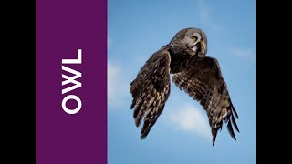 OWL Meaning: Wisdom, Compassion, and Consequences (Spirit Animal, Power Animal, and Totem Series)