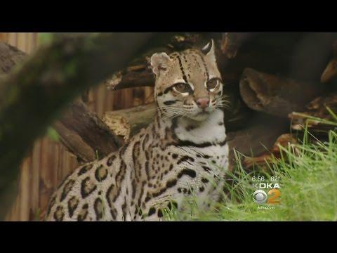 Jungle Odyssey Exhibit Comes To Pittsburgh Zoo & PPG Aquarium