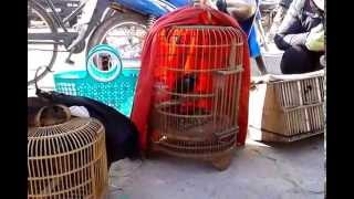 Bird Market In Vietnam