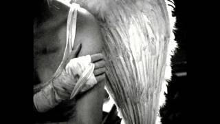 Ángeles humanos y sus alas heridas - De Las Crónicas de Ava - En la voz de Rosa Ayuso