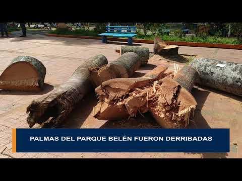 Polémica tala de las palmas del parque Belén