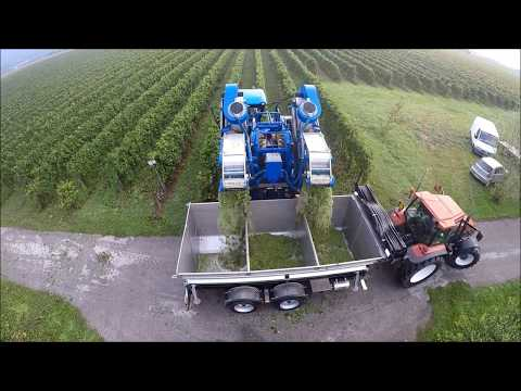 Grape Harvest | NEWHOLLAND POWER - Braud 9060L, Braud VL6070 & TM135