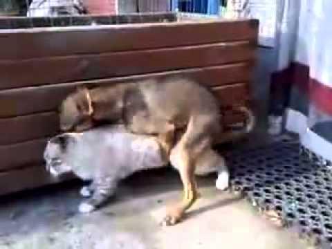 Aneh ! Anjing Perkosa Kucing