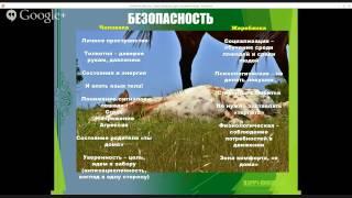 Открытый вебинар «Воспитание, обучение и развитие жеребят»