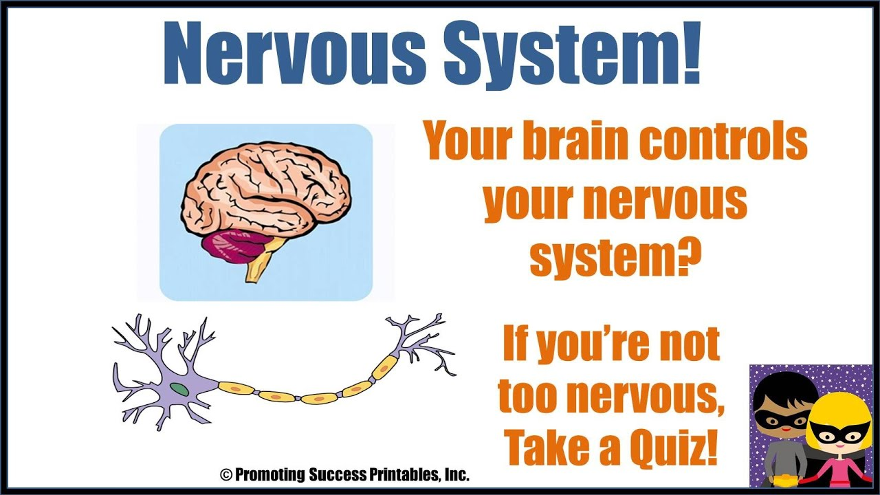 Nervous System Human Body Anatomy Science Video For Middle
