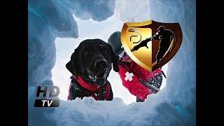 Собаки в поисково спасательной службе