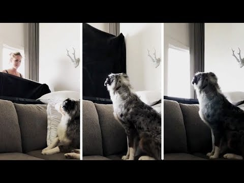 Dog's Amazing Reaction To Magic Trick | Try Not To Laugh