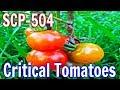 SCP-504 Critical Tomatoes | Object Class Safe | Species / plant / autonomous scp