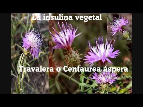 Planta Diabetes, insulina natural.