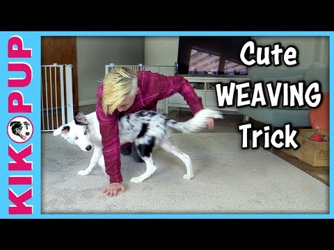 Cute canine freestyle trick!