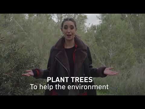 Plant A Tree In Israel With Jewish National Fund - Tu BiShvat