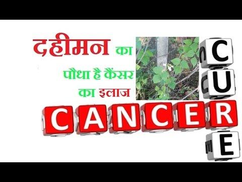 अब दवा ही नहीं पत्तियाँ भी करेंगी कैंसर का इलाज | Dahiman Plant Cures Cancer