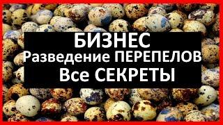 ПЕРЕПЕЛИНЫЙ бизнес / РАЗВЕДЕНИЕ ПЕРЕПЕЛОВ, как избежать ОШИБОК(Как начать зарабатывать деньги на перепелиных яйцах? Мой опыт в построении бизнеса на перепелах, перепелин..., 2016-02-14T19:01:38.000Z)