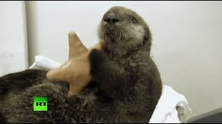 In otter news: This cute fella likes milk and needs a new home!