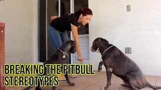 DOG TALK the Pitbull Stereotypes RaqC