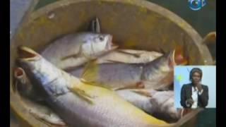 RTG / Cérémonie de clôture de la campagne promotion de débarquement du poisson