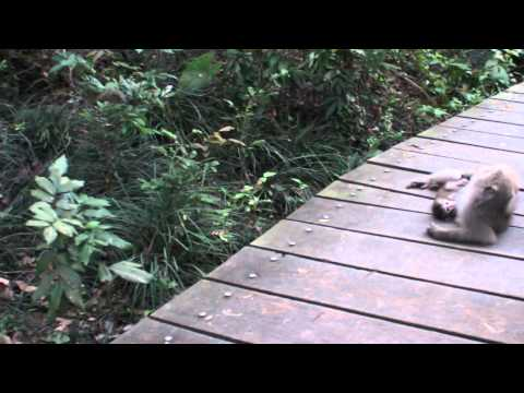 Monkeys in the Kaohsiung Shoushan Monkey Mountain