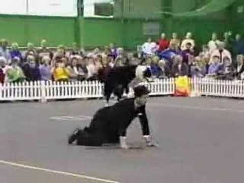 Charlie Chaplin dog dance
