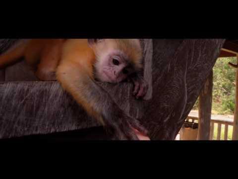 Malaysia 2016 - GoPro Travel Video