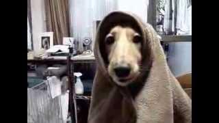 """犬好きお兄さんの愛犬プロモーションビデオ 第6弾 """"それは、遥か遠い町..."""